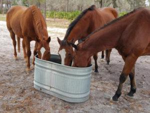Horse supply needs