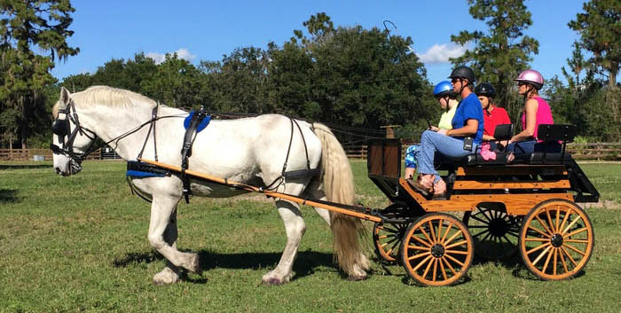 Carriage Driving Therapy